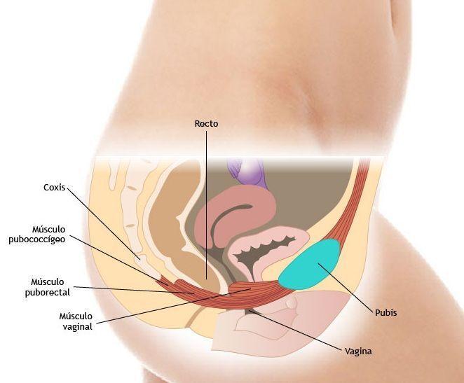 Anatomia-del-suelo-pelvico2