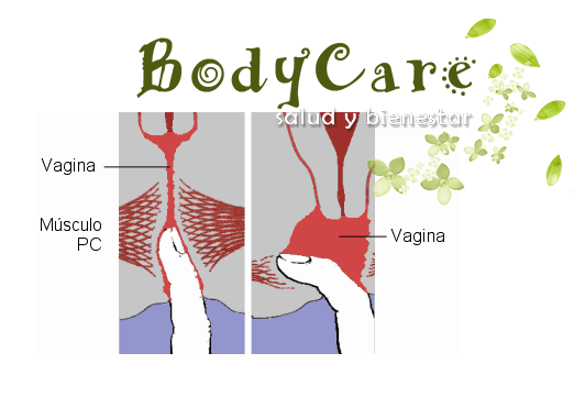musculo pelvico
